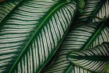 abstract, Green leaf pattern nature dark green background.