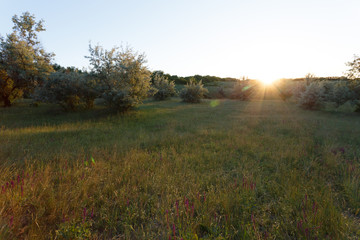 Sunset landscape in the meadow