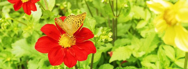 Yellow butterfly on a red flower.