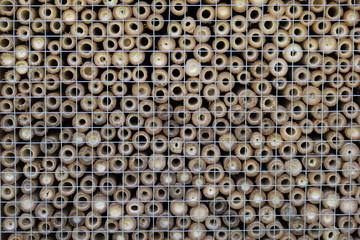 Bambous percés pour servir de nids d'abeilles