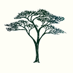 Acacia tree silhouette, hand drawn doodle sketch, black and white vector illustration