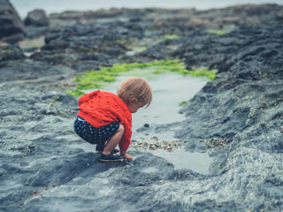 Little toddler exploring rock pool