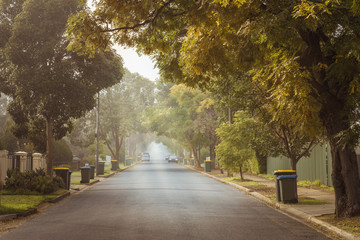 Australian foggy autumn morning in Adelaide suburbs with rubbish recycling on kerb Fotomurales
