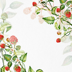 Composition of raspberry berries. Watercolor drawing handmade. Template, frame.