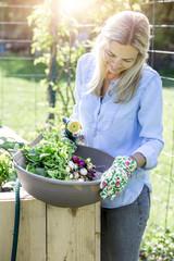 Woman is washing fresh organic radish