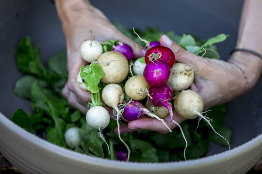 Woman is washing fresh organic radish