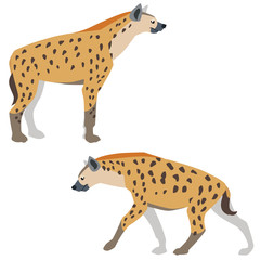 Vector illustration of standing and walking hyenas isolated on white background