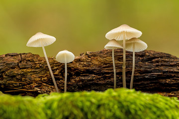 Nice close up picture from a small mushrooms