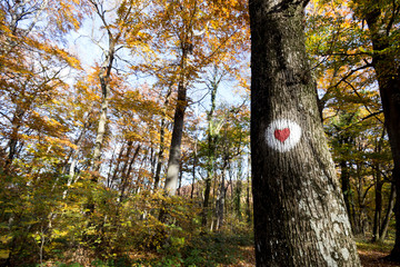 Red heart painted on tree in forest