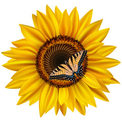Sunflower and swallowtail butterfly