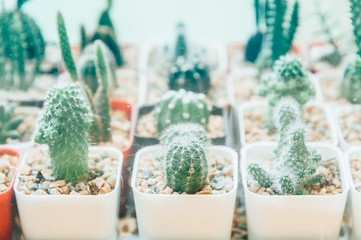 Collection of various cactus in different pots. Potted cactus house plants on  white background..succulent plants
