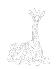 giraffe sits, lines, vector