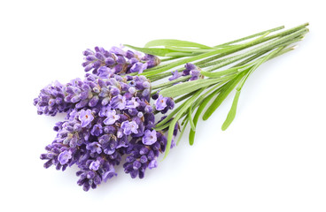 Lavender flowers on white background Wall mural