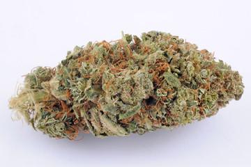 Cannabis e marijuana con alto cbd e basso thc - fiore - droga leggera da fumare - sostanze legali e illegali - erba curativa - ganja