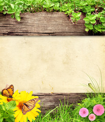 Wall Mural - Summer background with old wooden plank and insect