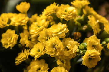 Small little yellow flowers