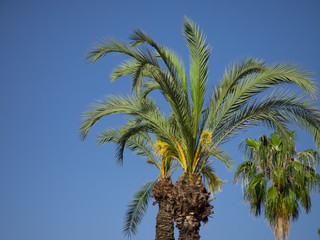 Green palm leaves over blue sky background.
