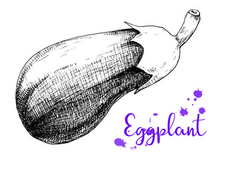 Sketch eggplant isolation on a white background.
