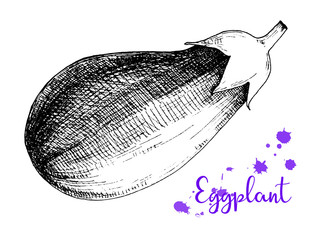 Sketch eggplant isolation on a white background. Vector.