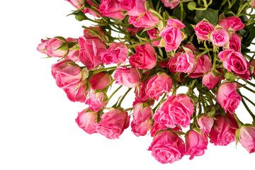 bouquet of small pink roses isolated on white background