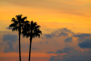 Palm trees in sunrise or sunset