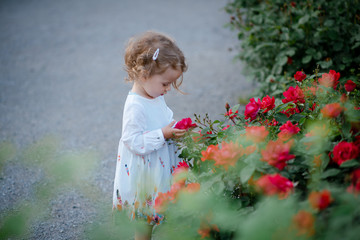 Cute little girl looking at the flower while stading near the beautiful rose buhes in the park. Happy kid. Outdoors.