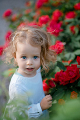 Portrait of beautiful cute little girl with curly blonde hair in beautiful white dress standing among the red roses. Bush with flowers. Park, outdoors