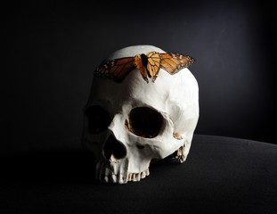 portrait of a human skull with a a monarch butterfly, photographed on black studio background.