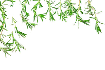 Rosemary sprigs as frame on white background with copy space