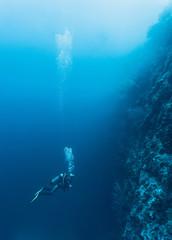 Diver swimming in sea