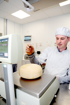 Cheese maker weighing wheels of hard cheese