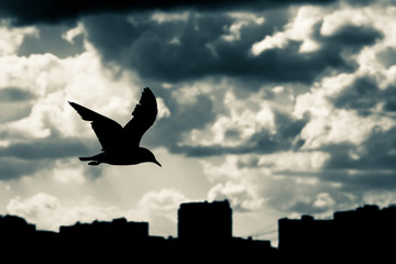Silhouette of seagull on background of dramatic sky and city