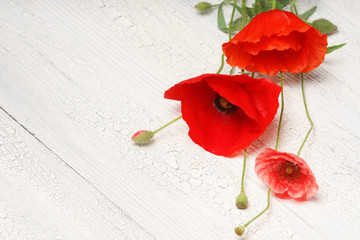 Red poppy flowers on white rustic wood.