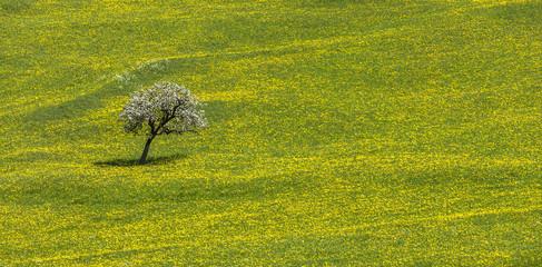 Blütenbaum in Blumenwiese