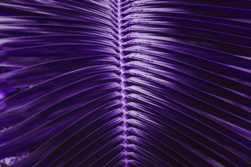 Vivid dark purple palm leaves pattern close up. Creative layout, toned, horizontal. Minimalism concept