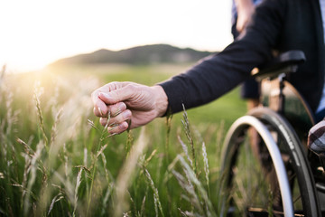 A hand of a senior man in wheelchair holding grass flower in nature. Close up. Fototapete
