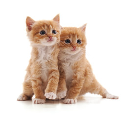 Two brown kittens.