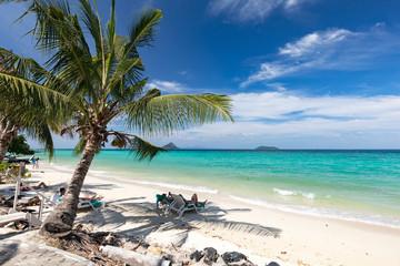 Palmtree on the beach. Thailand