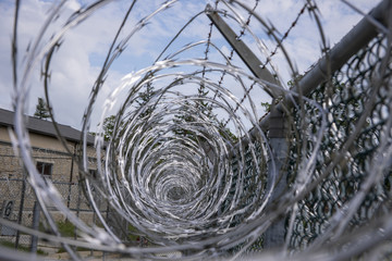 Coils of razor wire on metal mesh fence