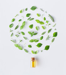 Bottle of essential oil with round shape of fresh herbs and spices basil, sage, rosemary, oregano, thyme, lemon balm,spearmint and peppermint setup with flat lay on white background