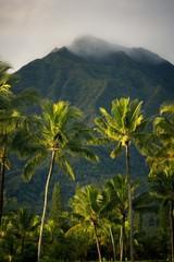 morning kauai vibes