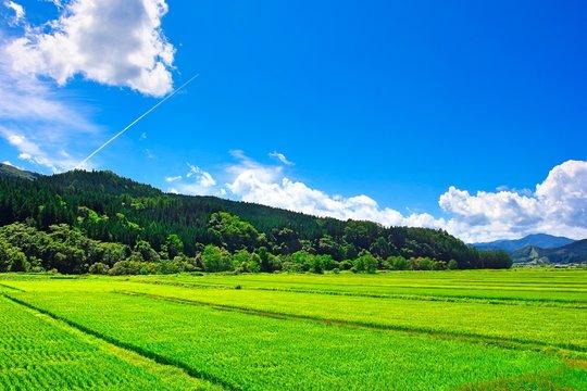 田舎の夏休みイメージ