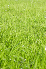 green grass frame background on nature in the park