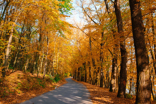 Bright and scenic landscape of new road across auttumn trees with fallen orange and yellow leaf