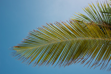 Real Tropical Island Palm Trees leaf