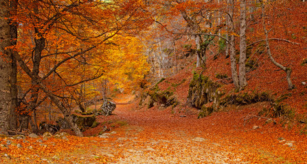 Aluminium Prints Autumn Nice autumnal scene in the forest