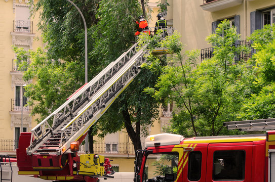 firefighters on aerial ladder cutting branches of a tree