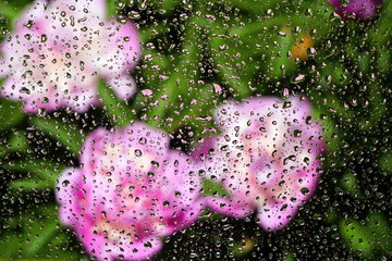 Raindrops on the glass and white peonies are blurred in the background. The concept of the summer rainy weather. Abstract background.