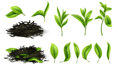 Close up realistic tea dried herbs and greens tea leaves isolated vector set