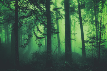 Wall Mural - Fantasy dark green colored fairytale foggy forest tree landscape. Color filter effect used.